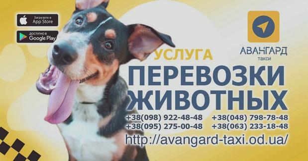Зоотакси Одессы. Телефонные номера заказа такси для перевозки собак и других домашних животных